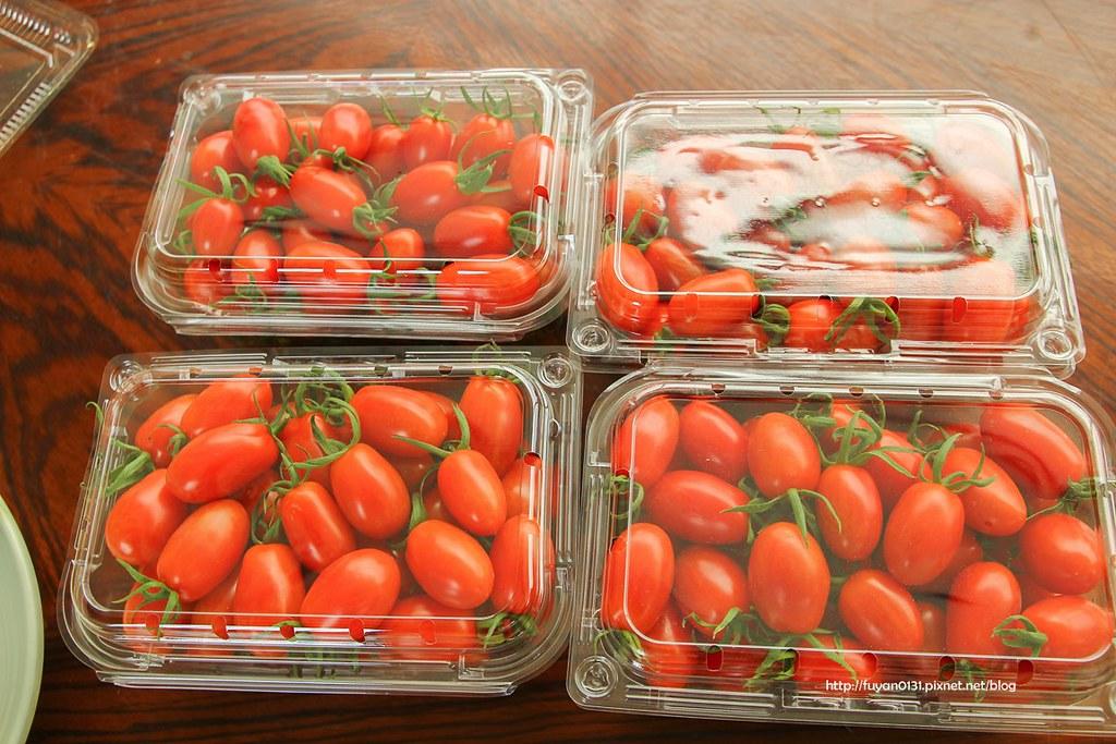 番茄 (52)