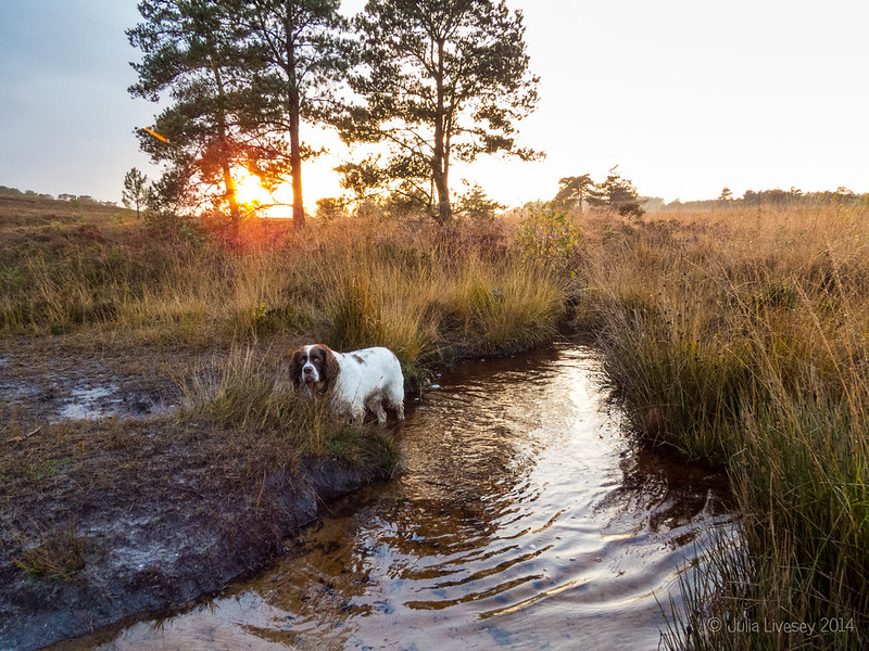 Max at the stream as the sun sets