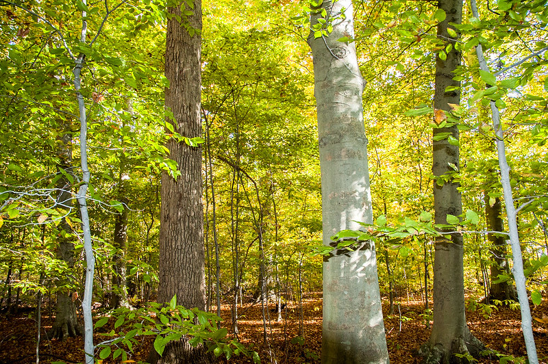 Tribbett Woods Nature Preserve