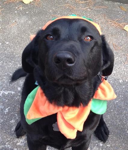 Oka on Hallowe'en!