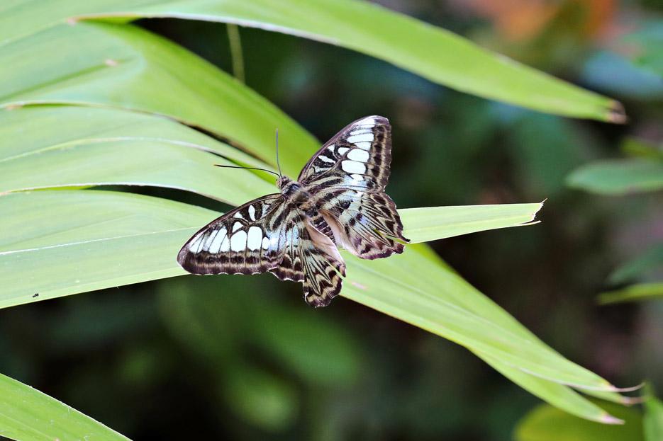 091014_01_butterfly11