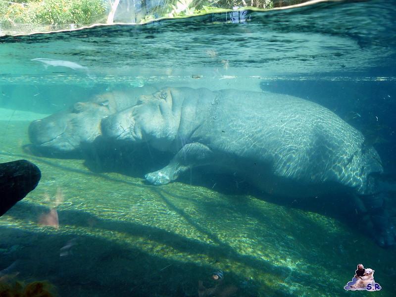 San Diego Zoo 10.11.2014 141