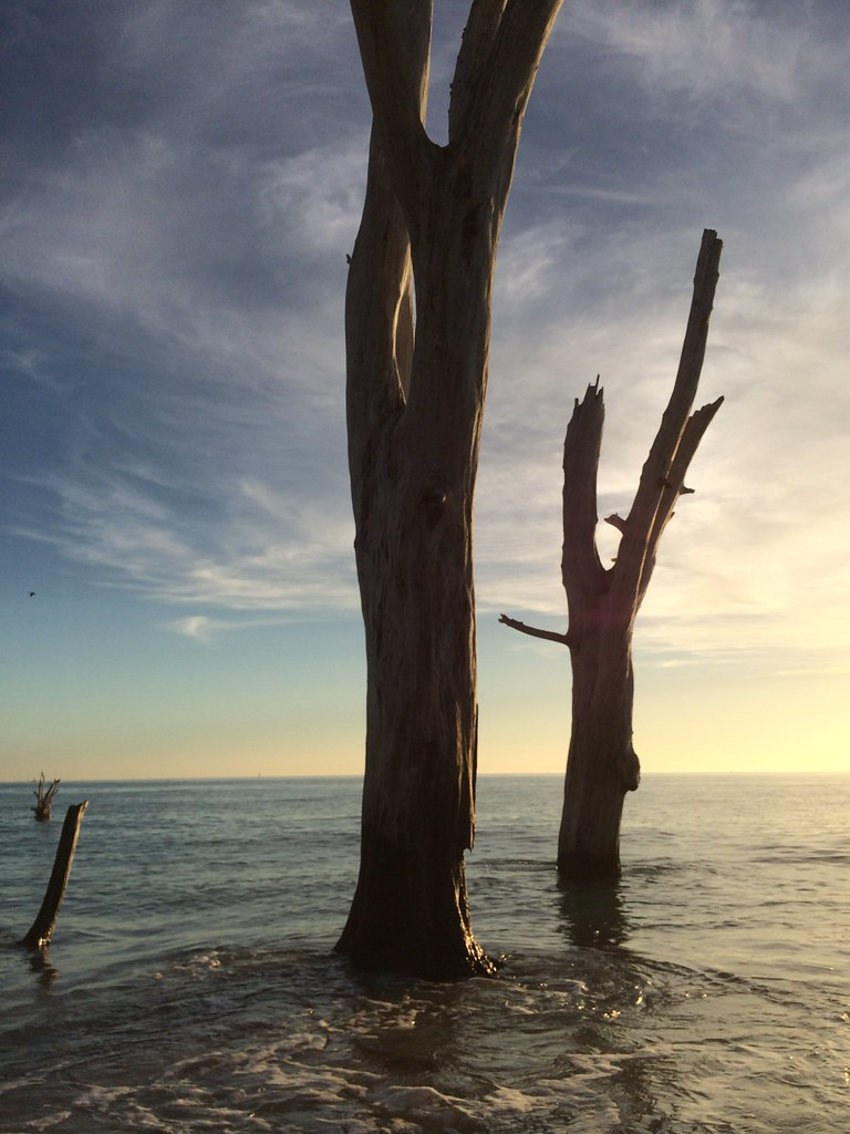 Love the Mystique of the Dead Trees at Stump Pass Beach State Park, Manasota Key, Englewood, Fla., Dec. 28, 2014
