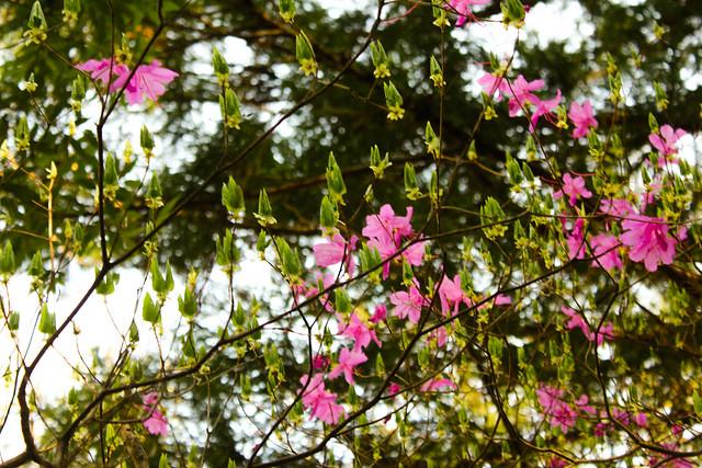2014-04-19_00091_美の山.jpg