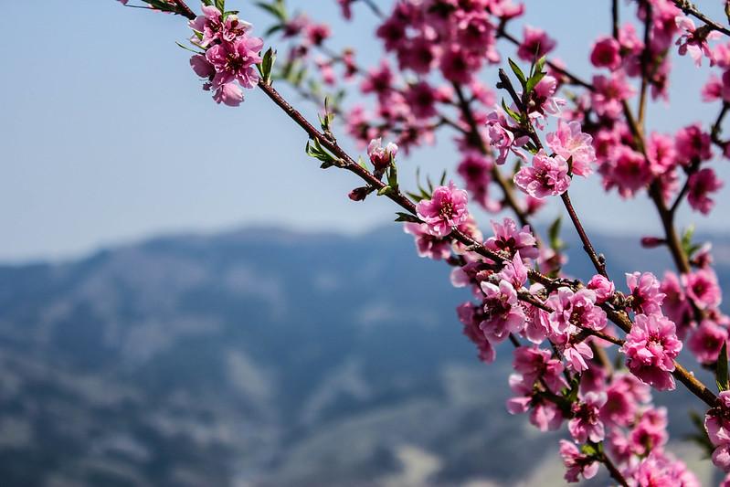 2014-04-19_00307_美の山.jpg
