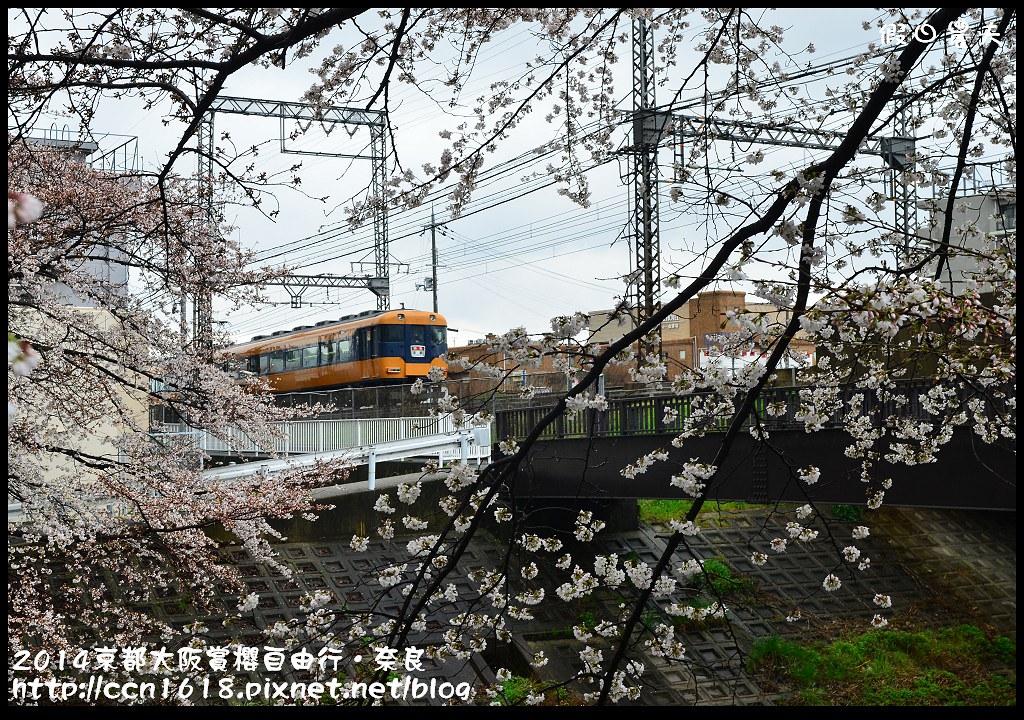 2014京都大阪賞櫻自由行.奈良DSC_0872