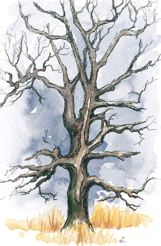20150111_tree