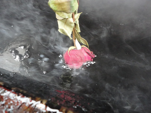 dipping roses in hot roofing tar