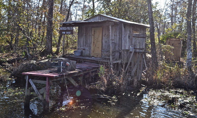 typical house on swamp - jean lafitte swamp tours