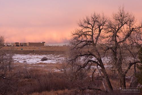 pink tree landscape dawn morninglight colorado unitedstates aurora nikond810