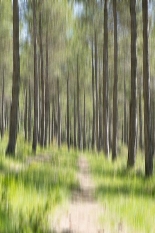 El bosque confuso