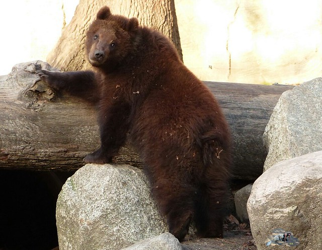 Tierpark Hagenbeck 17.45 _wm