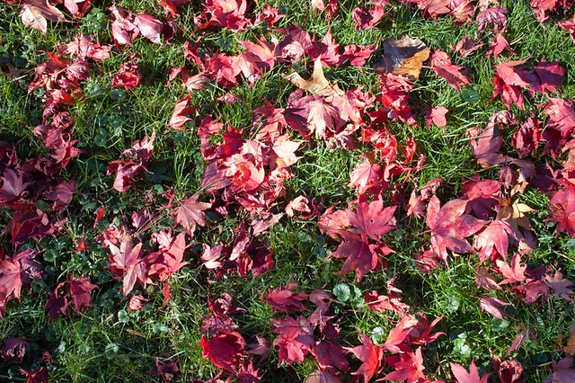 New York Sleepy Hollow leaves red