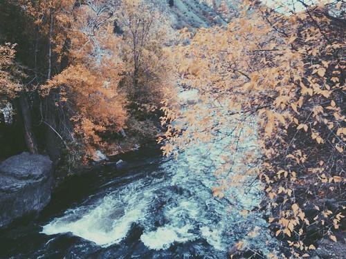 autumn trees fall nature water creek landscape utah provo provocanyon orangetrees hannahkemp