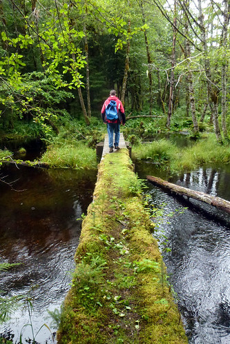 Moss and lichen grew fast on this Tongass National Forest recently built foot bridge due to the unique conditions of Southeast Alaska's temperate rainforest.  Here, the annual rainfall is measured in feet instead of inches.  Some places get more than 15 feet a year. (U.S. Forest Service/Jeff Miller)