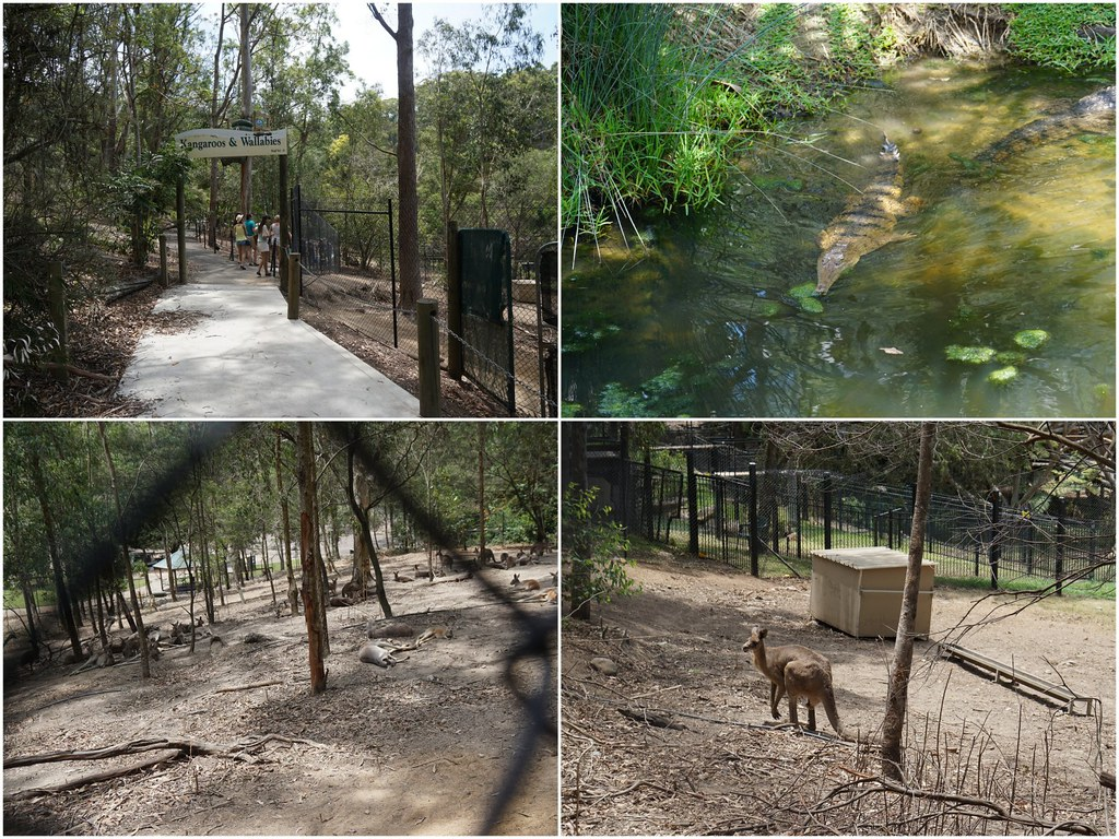 gold coast - Currumbin Wildlife Sanctuary - trip 2