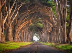 Road To Hobbiton