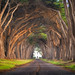 Road To Hobbiton by mikeSF_