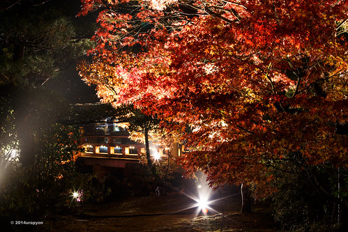 autumn red orange color tree yellow japan night canon landscape temple maple autumnleaves 日本 紅葉 秋 寺 fukushima nationaltreasure mapleleaves iwaki mapletrees 2014 coloredleaves 夜 福島 福島県 70200f4l いわき 国宝 ライトアップ eos6d いわき市 ef70200mmf4lisusm