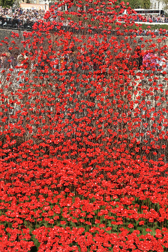 Tower of London Poppies 9