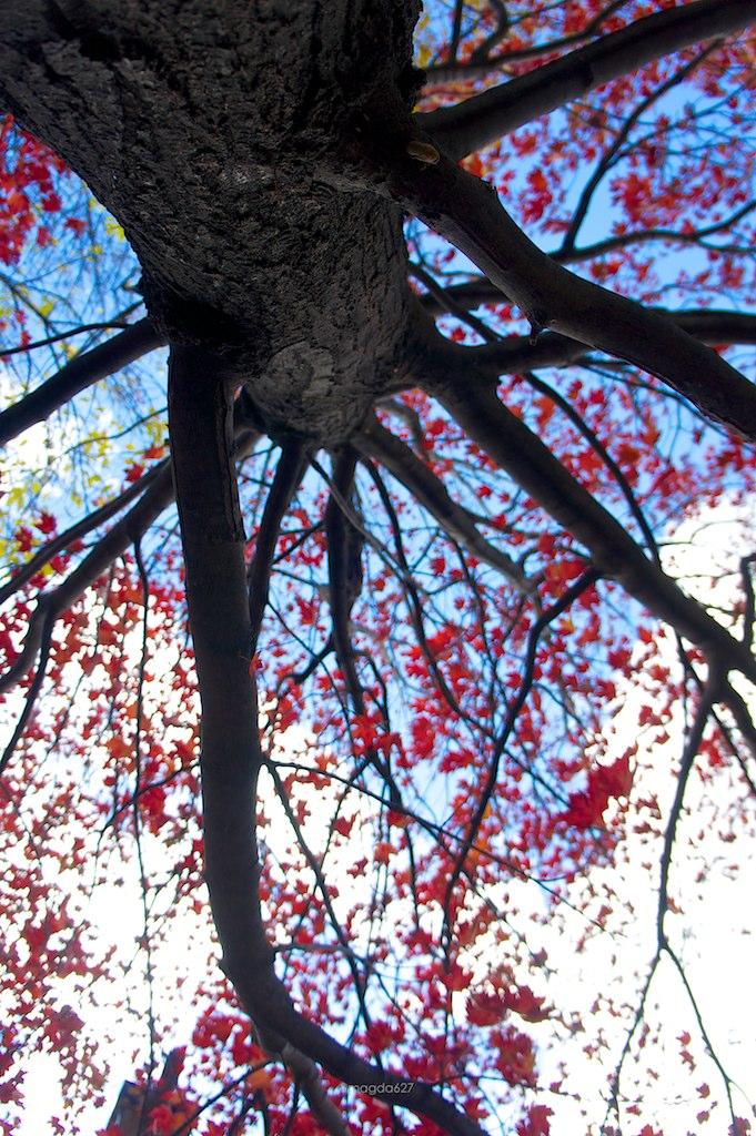 anteketborka.blogspot.com,   ciel_3 5