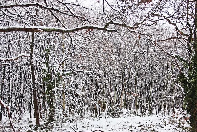 Winter-Wonder-Land Dez 2014_05