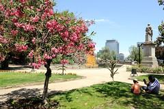 Tree and garden on Cerro Santa Lucia in Santiago, Chile