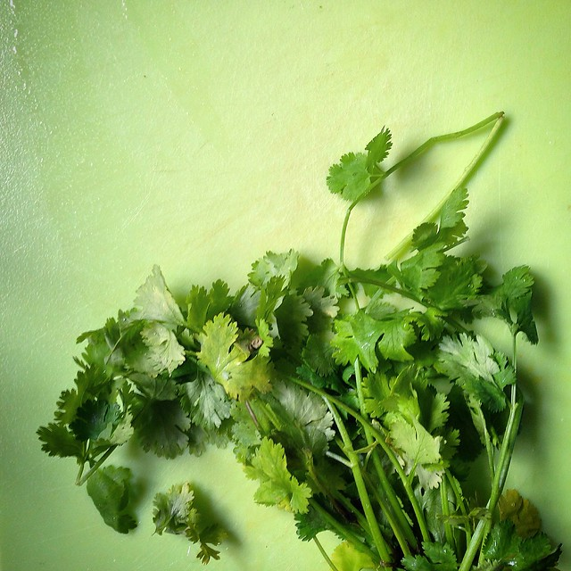 Married to Cilantro