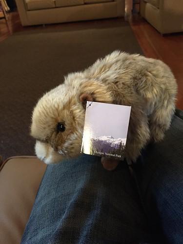 Olympic Marmot!