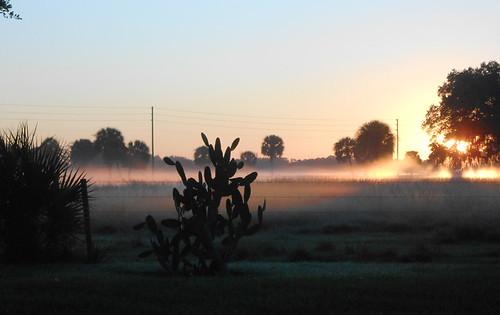 house sunrise backyard florida kingston sarasota 2014 kingstondrive gulfgateeast