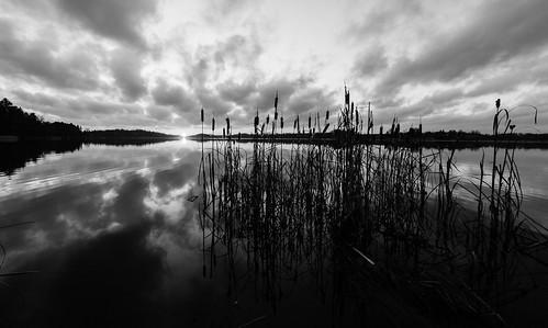 autumn sunset blackandwhite bw sun lake fall nature monochrome espoo finland lens landscape prime evening twilight sundown cattail ilta syksy järvi auringonlasku aurinko uusimaa 14mm pitkäjärvi laaksolahti osmankäämi jupperi