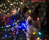 Puppy in Christmas Lights
