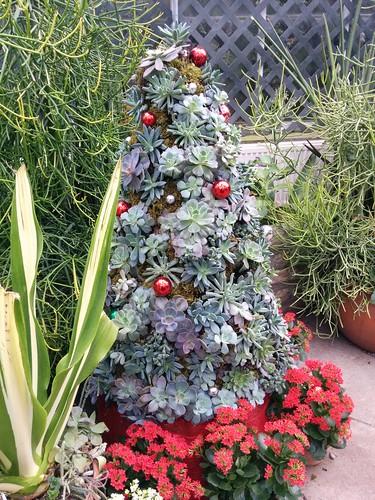 Allan Gardens succulent xmas tree