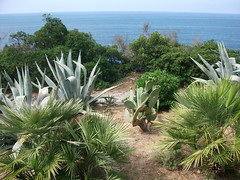 botanical garden(0.0), flower(0.0), grass(0.0), arecales(1.0), garden(1.0), tree(1.0), plant(1.0), flora(1.0), agave azul(1.0), vegetation(1.0),
