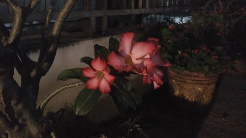 ภาพถ่ายกลางคืนโดย Oppo R5
