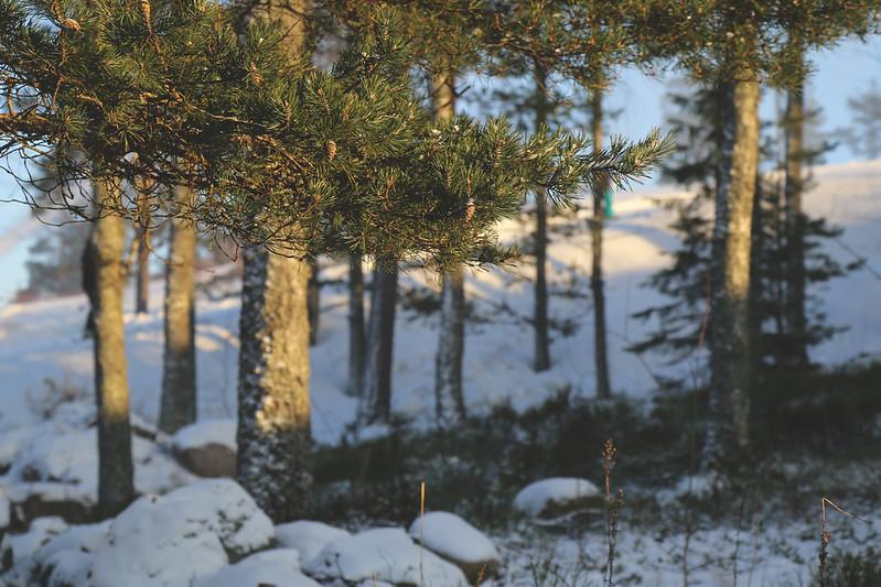 swinghill_Espoo_4