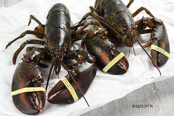 阿莫先生買龍蝦,及處理龍蝦-20150104