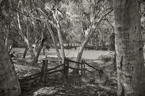 landscape outbackqueensland barcaldine outbackaustralia aliceriver nikond800 outbackriver riverghostgums lloydjoneswier