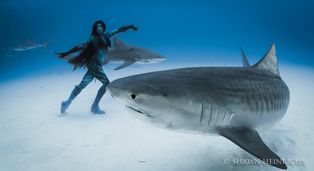 Dance with the Sharks