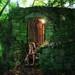 Just a hidden fairy library by John Wilhelm is a photoholic