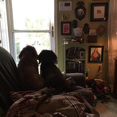 The boys earned their keep this morning. The got the evil squirrel to get out of our yard.