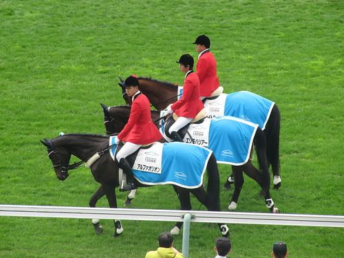 函館競馬場の誘導馬