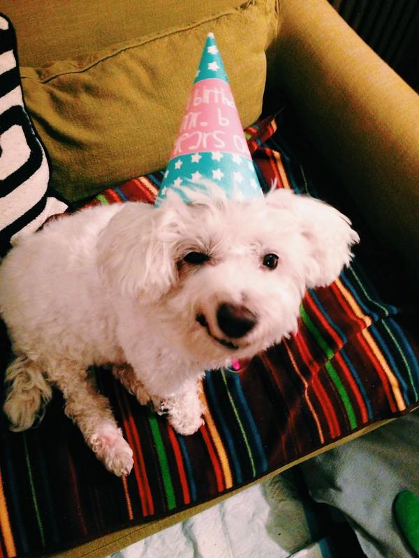 Budda turned 14!