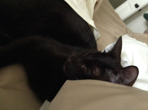 Whiskers & Paws: July 2015 Edition