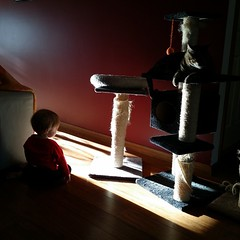 Morning silhouettes (and scratching posts that need fixing) #mybeautifulbaby #catsofinstagram #unfiltered