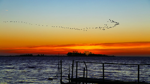 sunset birds denmark piers
