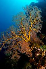 Suva Scuba Dive - 10 January 2015