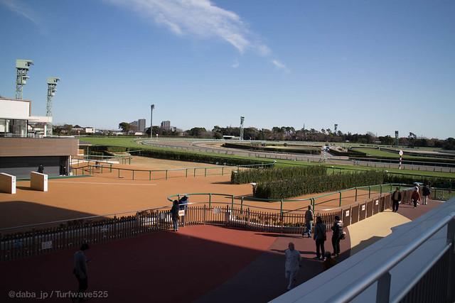 """20141207 中山競馬場 グランプリロード(はなみち) / GrandPrix Road """"Hanamichi"""" at Nakayama R.C."""