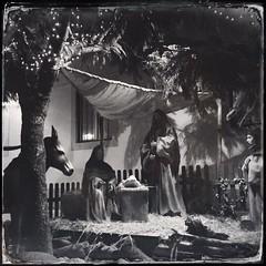 Nativity scene:sparkles: