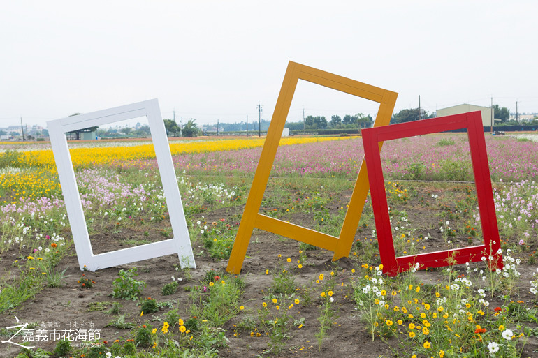 台南私藏景點-嘉義花海節 (24)